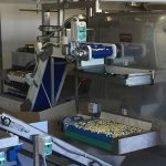 Belt pre-dryer for pasteurized fresh pasta