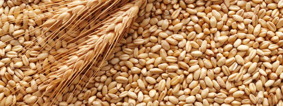 materia prima per produrre pasta secca artigianale