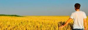 agricolture pasta factories