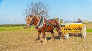 Agricultural pasta factory: from wheat to pasta, all on horseback